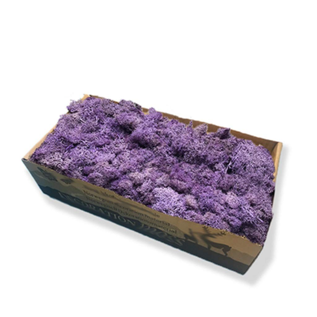 JIAJIANPING 1 Box of Multi-Color Reindeer Moss, Weighing 500g, Your Artistic Talent Can Be Combined with These Mosses (Color : Purple)