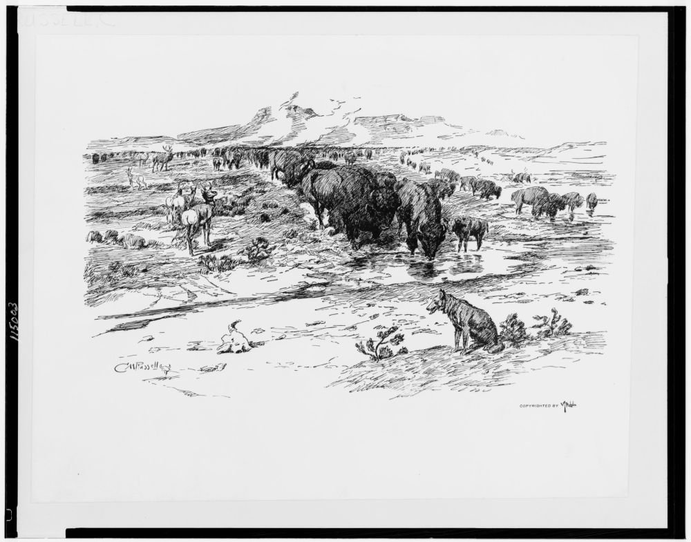 1899 Photo Nature's cattle / C.M. Russell. Buffalo and antelope on prairie. Location: Great Plains by Historic Photos