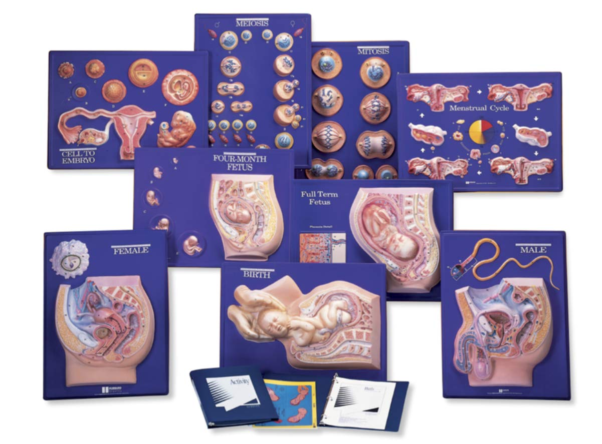 American Educational 9 Piece Human Reproduction Master Set