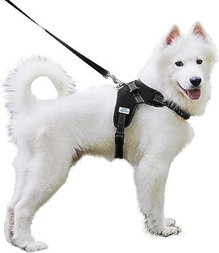 Arnés para perro Furry Concepts – 5 colores disponibles – Incluye ...