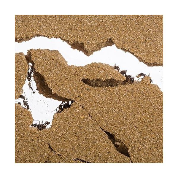 AntHouse - Formicaio Naturale di Sabbia - Kit Inizio Acrilico 20x10x10 cm (Formiche Incluse con Regina) 5 spesavip
