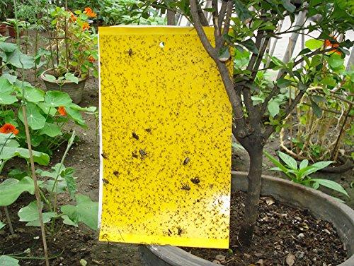 Tebery Pest Control