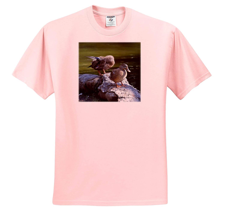 3dRose Susans Zoo Crew Animal T-Shirts Mallard Ducks on Rocks Birds