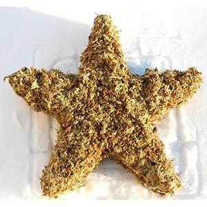 "16"" Star Sphagnum Moss Living Wreath Form 10"