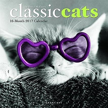 Calendario 2017 gato Malin - gato tigre - gato gracioso ...