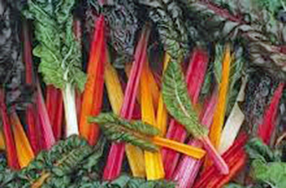 Swiss Chard Seeds,Swiss Chard, Rainbow, Heirloom, 100 Seeds, Non GMO