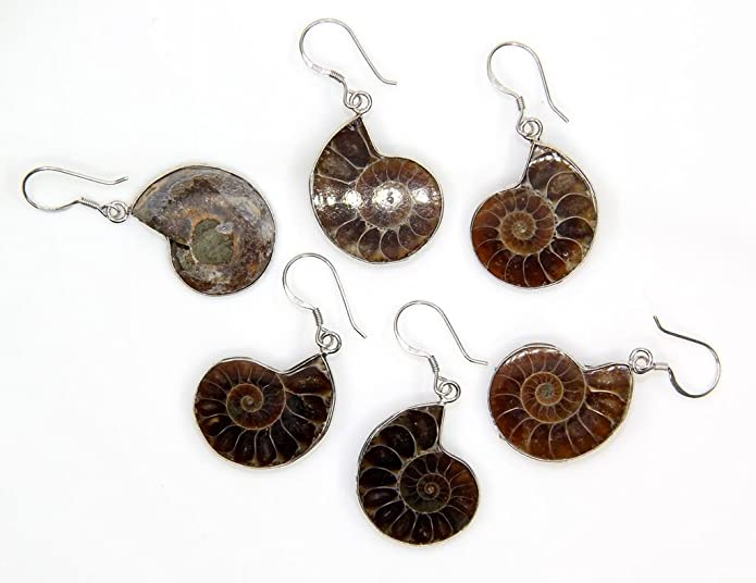 Natural Ammonite Fossil with S925 Sterling Silver Hook Charm Earrings M1ps0eK6DZ