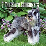 Miniature Schnauzers 2018 12 x 12 Inch Monthly Square Wall Calendar, Animals Small Dog Breeds (Multilingual Edition)