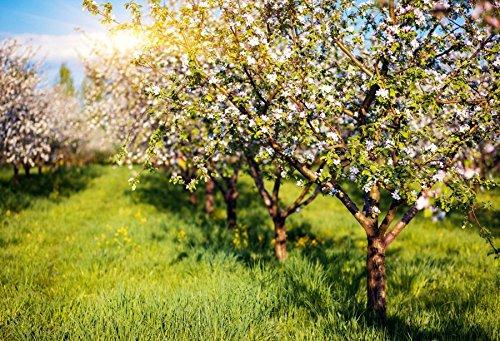 Baociccoa Sunshine Orchard Blossom Trees 背景幕 10x7フィート ビニール写真 背景 白 咲き花 青空 白雲 ラッシュグリーン 草 田舎風景 夏 休日 子供 Portratis   B07G3RBM2V