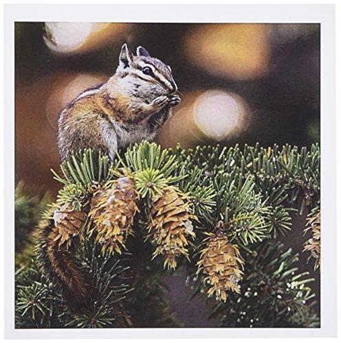 3dRose Uinta Chipmunk Wildlife, Rocky Mountain, Colorado Greeting Cards, 6
