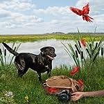 The Money Bird: An Animals in Focus Mystery | Sheila Webster Boneham