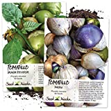 Tomatillo Duo, Purple & Grande Rio Verde Tomatillo Seeds (Physalis ixocarpa) Non-GMO Seeds by Seed Needs