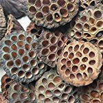 Elibone-Natural-Dried-Brown-Lotus-Flowers-Preserved-Mini-Flower-Crafts-for-Home-Decoration-DIY-Crafting-Accessories-1pcs