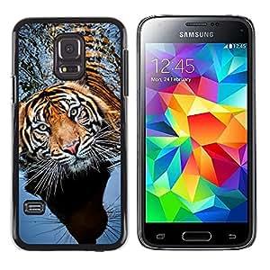 FlareStar Colour Printing Tiger Swimming Nature Animal Tropical cáscara Funda Case Caso de plástico para Samsung Galaxy S5 Mini / Galaxy S5 Mini Duos / SM-G800 !!!NOT S5 REGULAR!