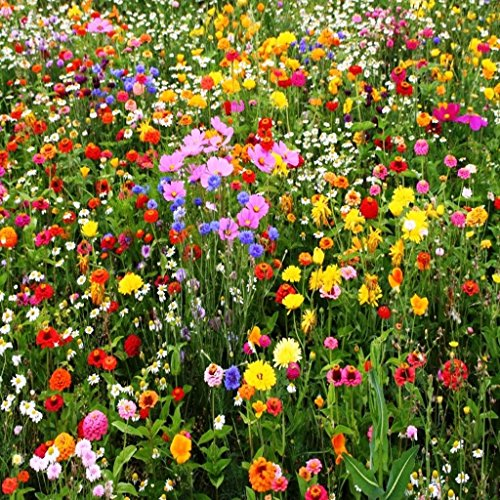 1 Oz, Approx 12,500 Seeds Wild Flower Mix,covers Approximately 125 Square Feet - Scarlet The Flower