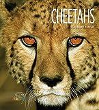 Cheetahs, Rachael Hanel, 1583417370