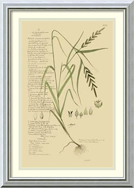 Framed Art Print U0027Descubes Ornamental Grasses Iu0027 By A. Descubes
