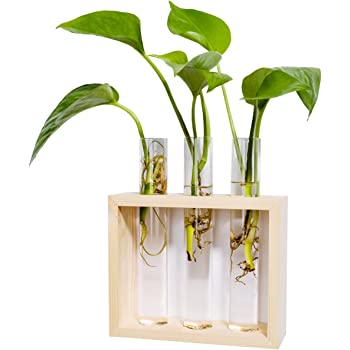 Amazon.com: Mkono Wall Hanging Planter Test Tube Flower