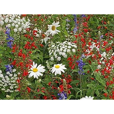 5K Seeds Red White & Blue Wildflower Mix (1/4 oz) : Garden & Outdoor