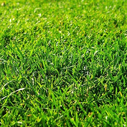 芝の種:西洋芝バミューダグラス ミラージュ2(ツー) 1kg ノーブランド品 B06XKS6LDQ
