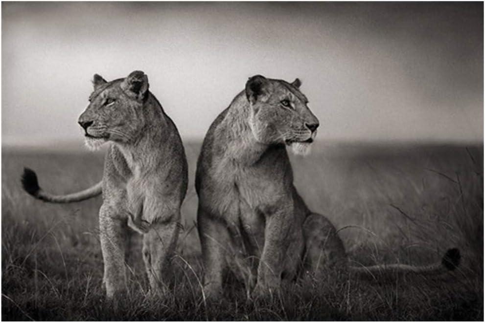 Blanco y negro León africano Animal salvaje Carteles e impresiones Paisaje Lienzo Pintura Arte Cuadro de pared para sala de estar-60x80cm Sin marco
