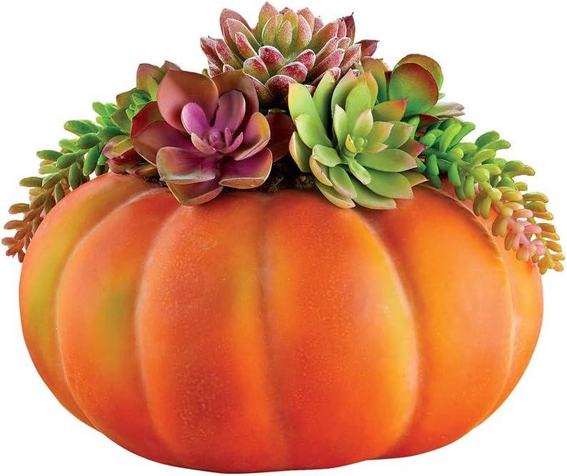 Amazon Com Collections Etc Succulent Pumpkin Tabletop Decoration