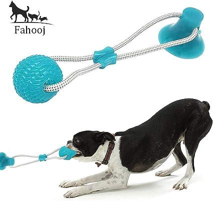 erezione del terrier giocattolo