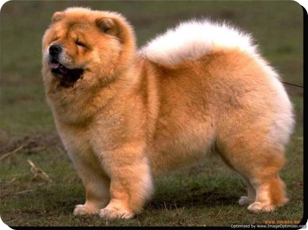 """/""""Keep Calm and Hug a Chow Chow/"""" Dog Keyring"""