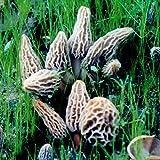 Morel Habitat Kit - Backyard Morel Mushroom Growing Kit