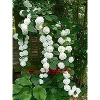 20 semillas de semillas / bolsa de hortensias, hortensias china, flores de hortensia bonsai, 11 colores semillas de…