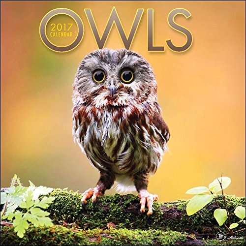 TF Publishing 171159 Wall Calendar 2017, Owls
