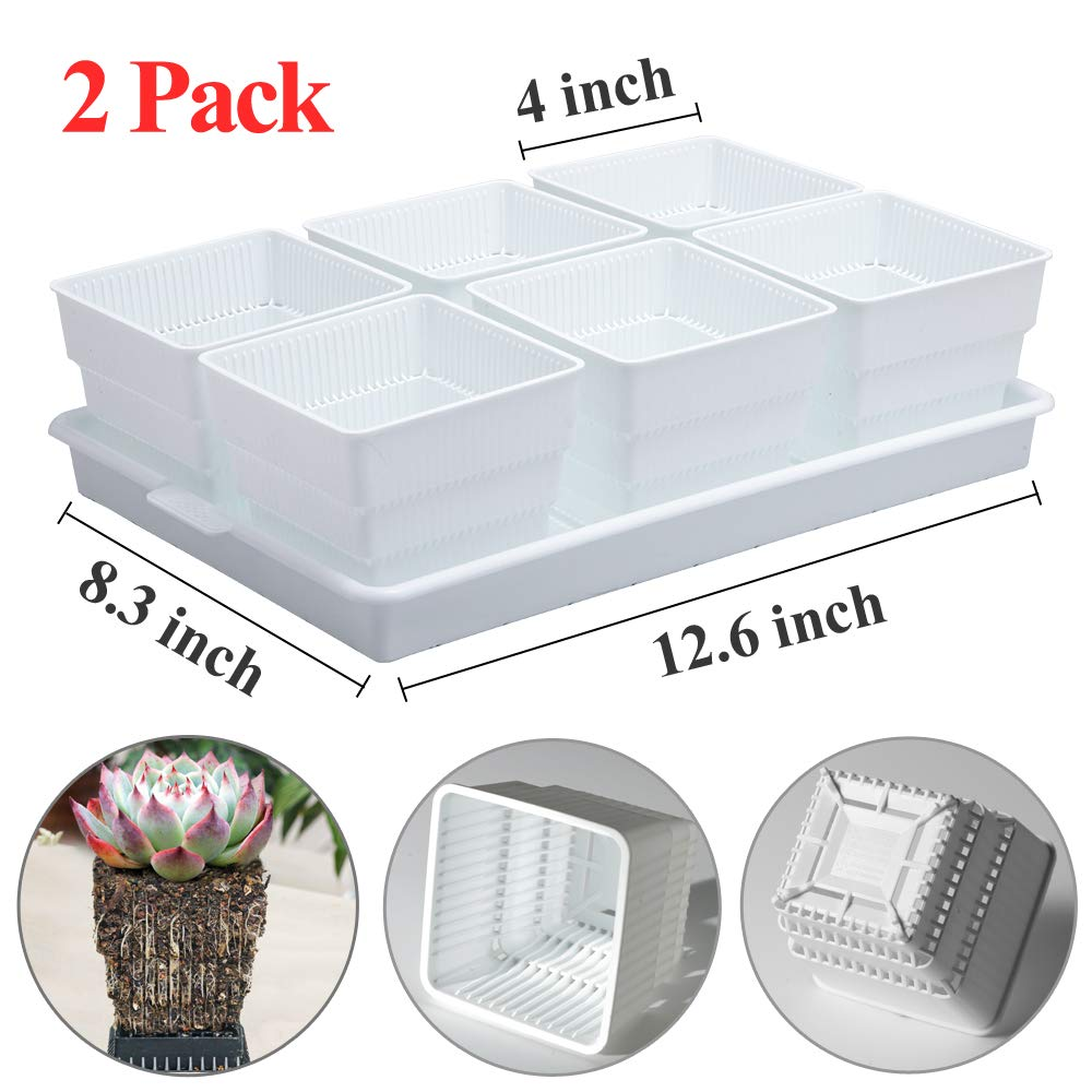 Meshpot 2.4 Inch Plastic Square Succulent Cactus Pot with Holes 20 Pack White