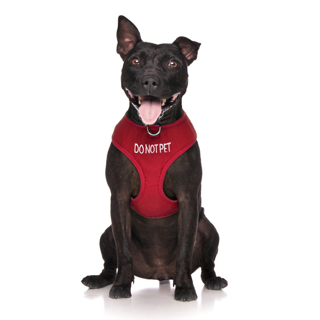 Dexil Limited DO NOT PET Red Color Coded Non-Pull Front and Back D Ring Padded and Waterproof Vest Dog Harness PREVENTS Accidents By Warning Others Of Your Dog In Advance (L)