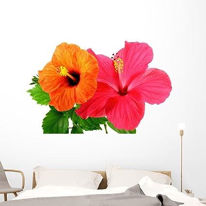 Amazoncom Wallmonkeys Fot 26337663 60 Wm162143 Hibiscus Flowers
