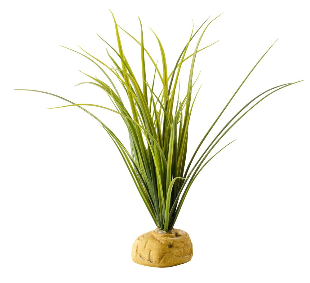 Exo Terra Turtle Grass Plant