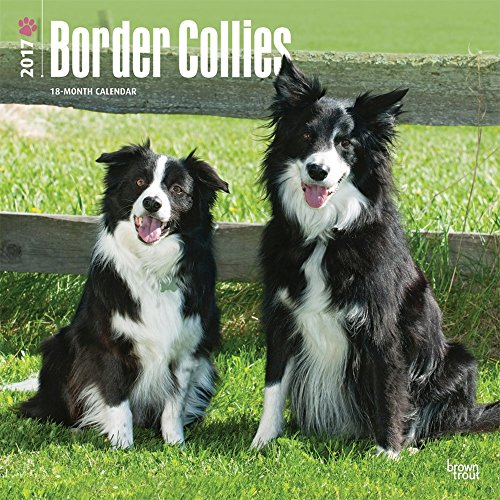 2017 Border Collie Wall Calendar