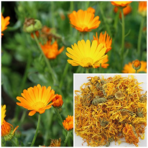 Calendula flowers, 1oz, soap making supplies, also for herbal extracts, tinctures, teas, salves, creams, lotions or lip balms. (Herbs Flowers Dried)
