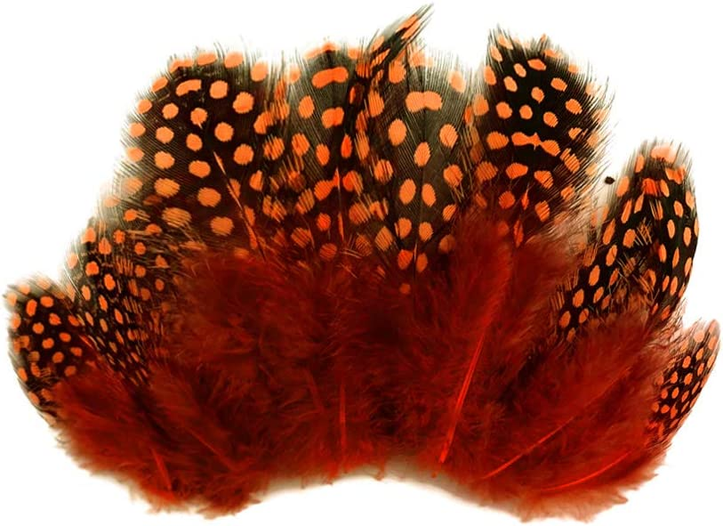 Guinea Feathers Natural Black and White Guinea Hen Plumage Polka Dot Feathers Wholesale 14 Lb Bulk Halloween Party Craft : 3246