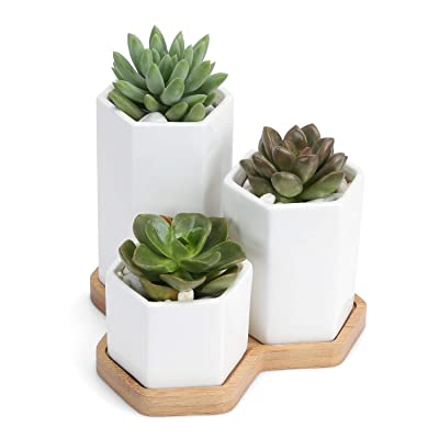 Ceramic Succulent Planter with Square Design Succulent Pots with Bamboo Tray Small Cactus Plant Pot for Home, Garden, Office Decoration (Set of 3): Garden & Outdoor