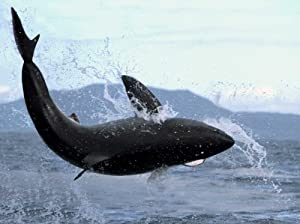 Posterazzi Poster Print Collection Great White Shark Leaping Out of Water to Catch Seal False Bay South Africa Mike Parry, (18 x 24), Multicolored