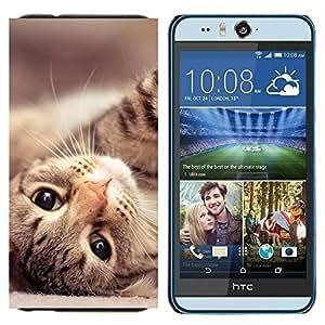 YiPhone /// Prima de resorte delgada de la cubierta del caso de Shell Armor - Maine Coon Gato American Shorthair - HTC Desire Eye M910x