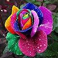 Dealglad 1000Pcs Beautiful Rainbow Rose Seeds Multi-colored Rose Seeds Rose Flower Seeds