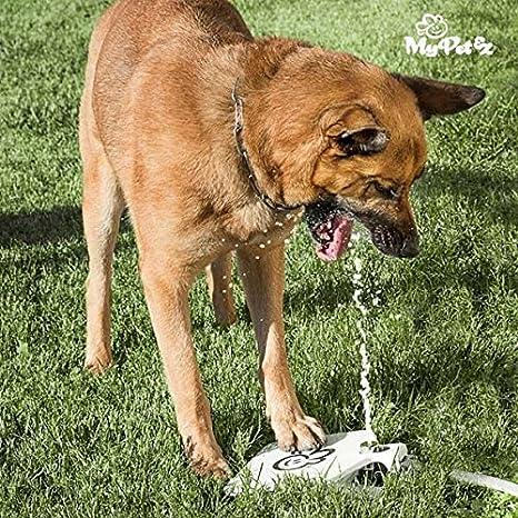 Exclusiva fuente para perros! ¡Dispensador de agua de jardín para su perro! ¡Fuente bebedero automá