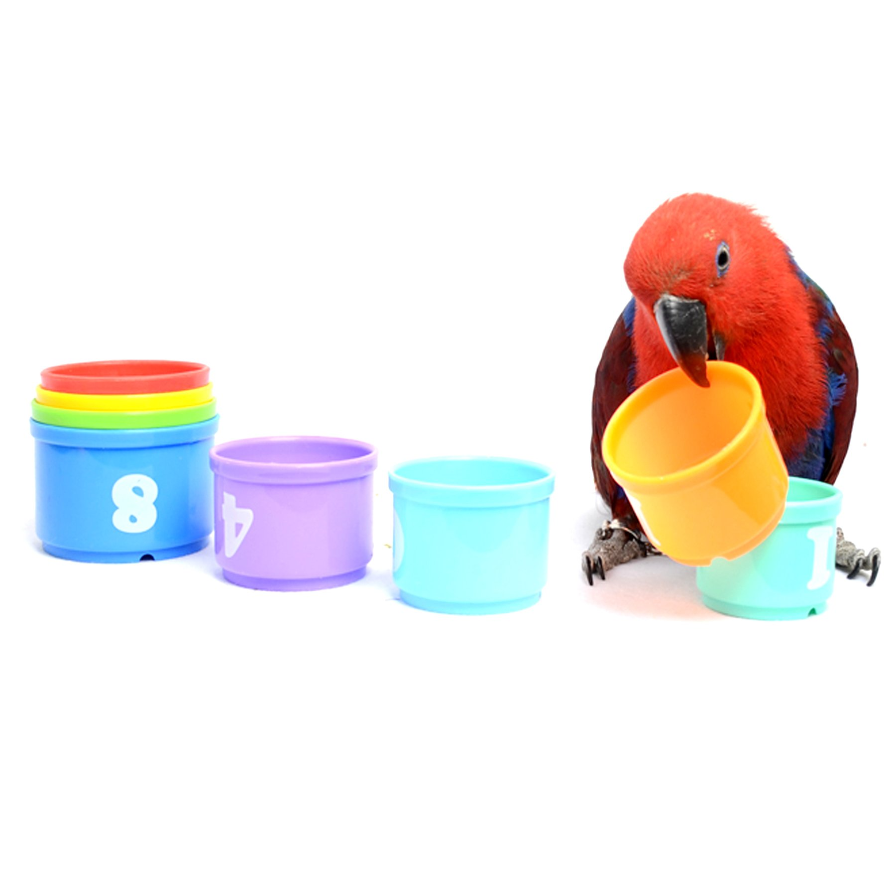 Alfie Pet by Petoga Couture - Daly Educational Stacking Cup Toy for Birds