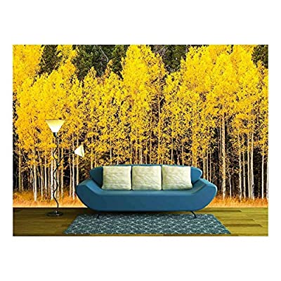Magnificent Craft, Stand of Changing Yellow Aspen Tree in Front of Dark Green Pine Trees in Mountains of Colorado on Fall Afternoon, Made For You