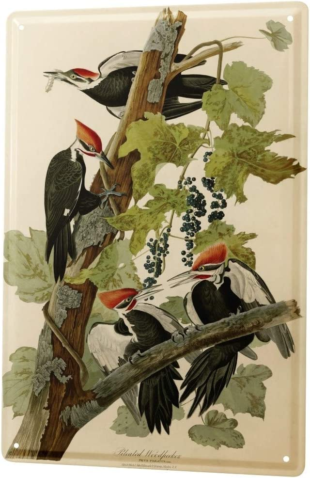 LEotiE SINCE 2004 Tin Sign Metal Plate Decorative Sign Home Decor Plaques Bird Pileated Woodpecker