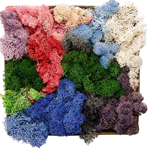 Chinco Reindeer Moss Mixed Color Preserved Floral Moss for Dressing Potted Plants, Fairy Garden, Terrariums and Many Other Crafts (7 Ounce) ()