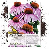 Seed Needs, Purple Coneflower (Echinacea purpurea) 500 Seeds