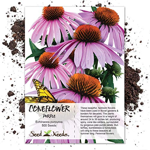 Grow Purple Coneflower - Seed Needs, Purple Coneflower (Echinacea purpurea) 500 Seeds