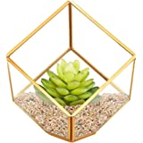 HOMEIDEAS Modern Glod Geometric Terrarium Metal Faceted Tabletop Succulent Plants Holder Glass Air Plant Holder 6 x 6 x 10 Inches(Golden)